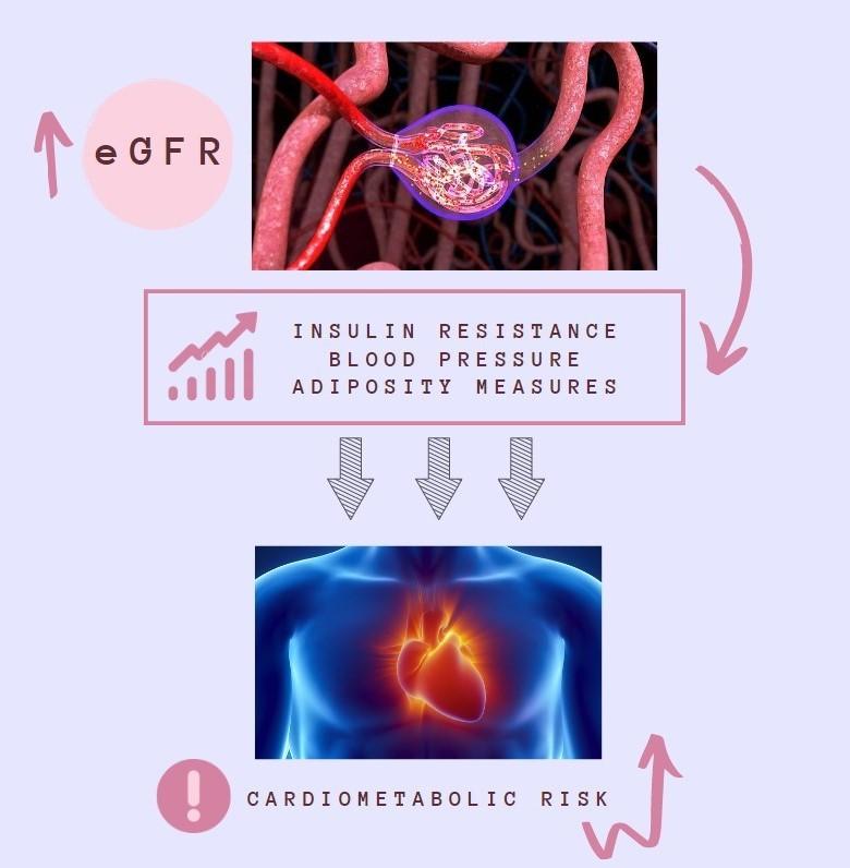 Relació entre funció renal i risc cardiovascular en nens i nenes sans